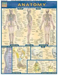 Anatomy: Reference Guide